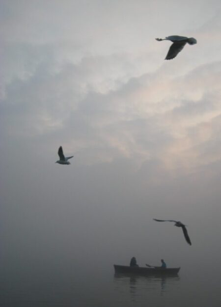 birds over ganges
