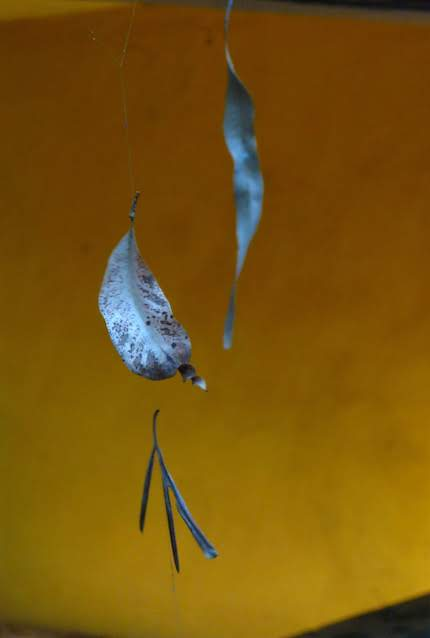 leaf on spiders web