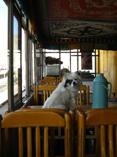 Dog in Labrang restaurant China