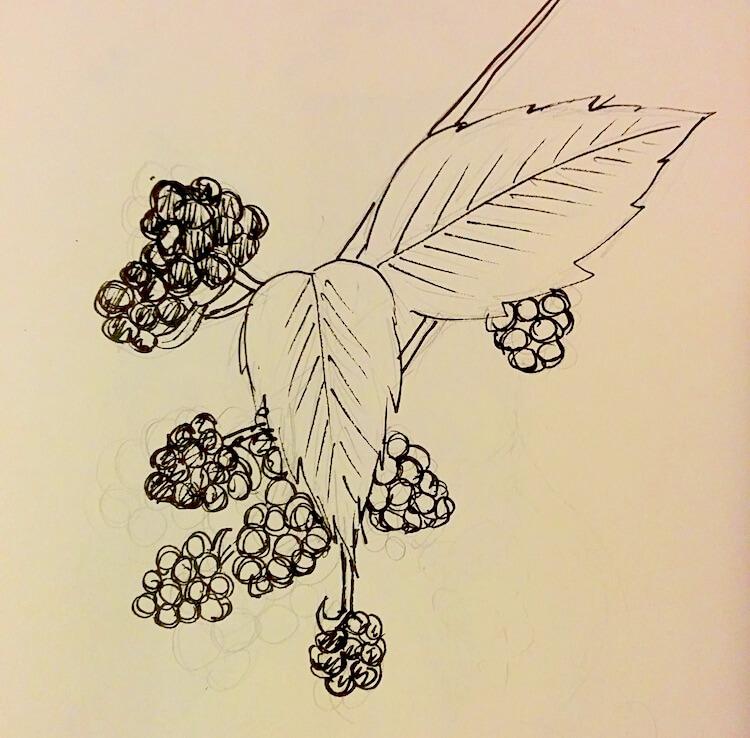 brambles ink drawing