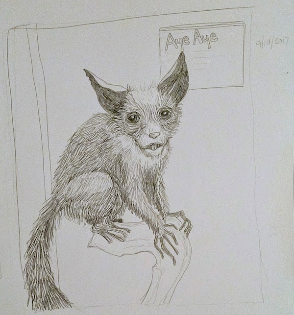 Aye-aye illustration laura morgans