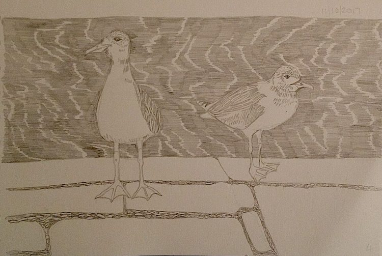 seagulls bristol harbourside illustration inktober