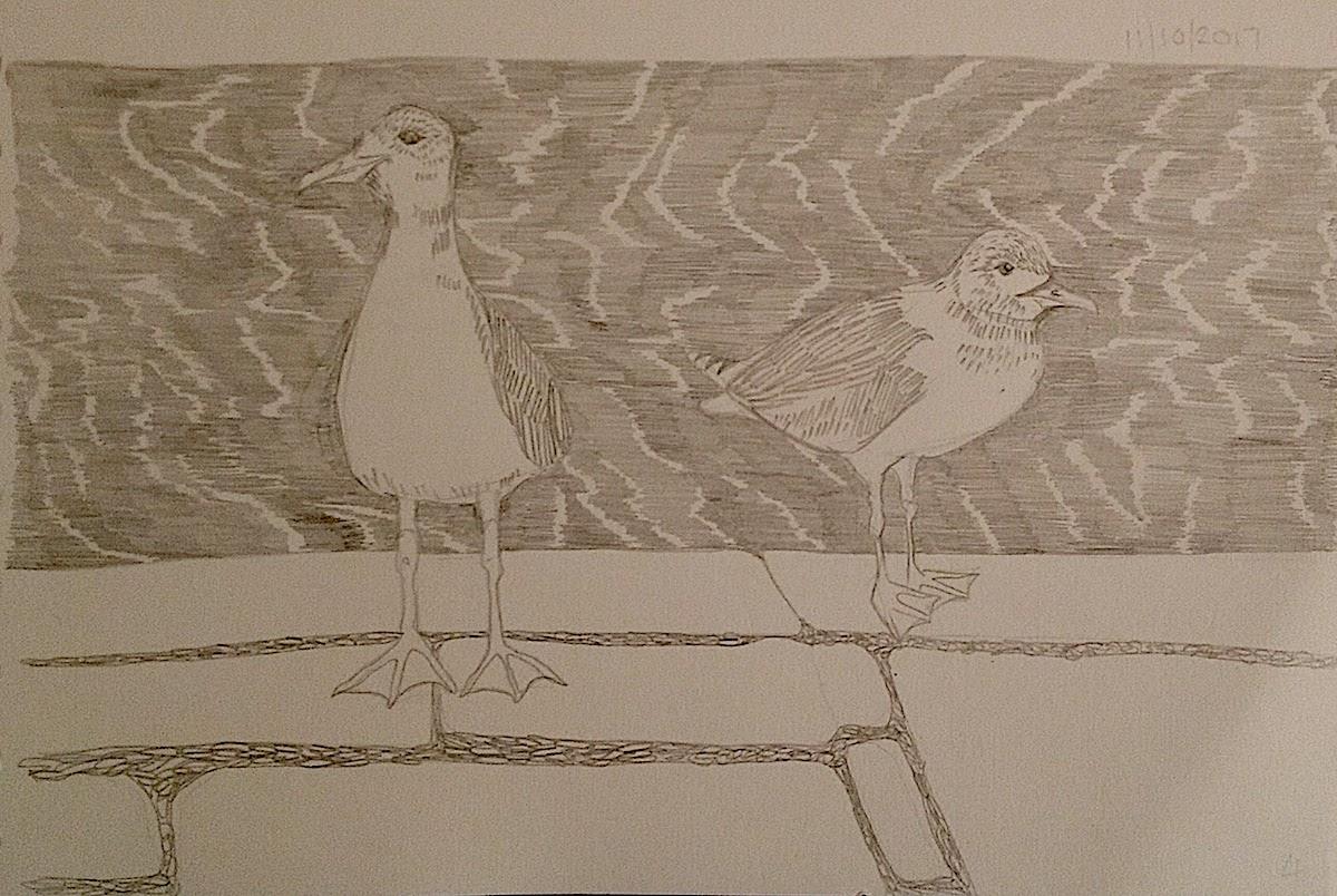 seagulls bristol harbourside illustration inktober